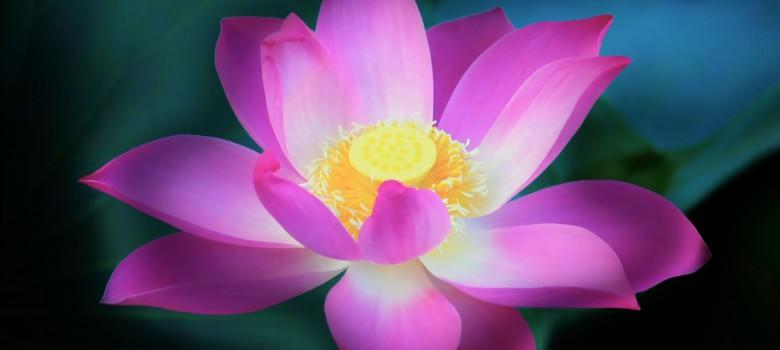 lotus-wallpapers-hd