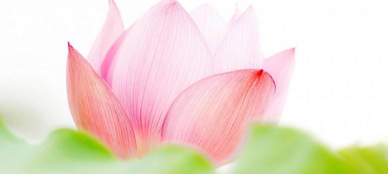 oboi-cveti-nezhnie.1024x600